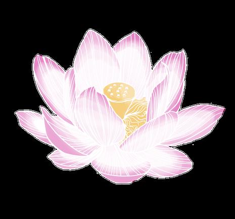 dessin fleur de lotus sacré
